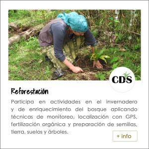 CDS reforestacion