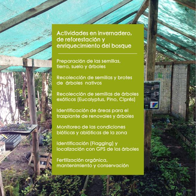CDS Reforestacion evento 2