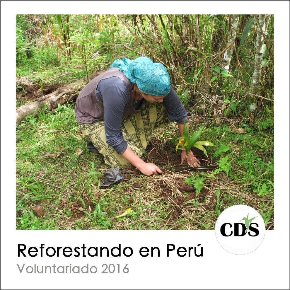 CDS reforestacion evento