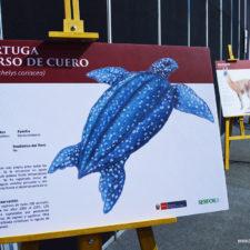 Libro Rojo de Fauna Silvestre Amenazada del Perú
